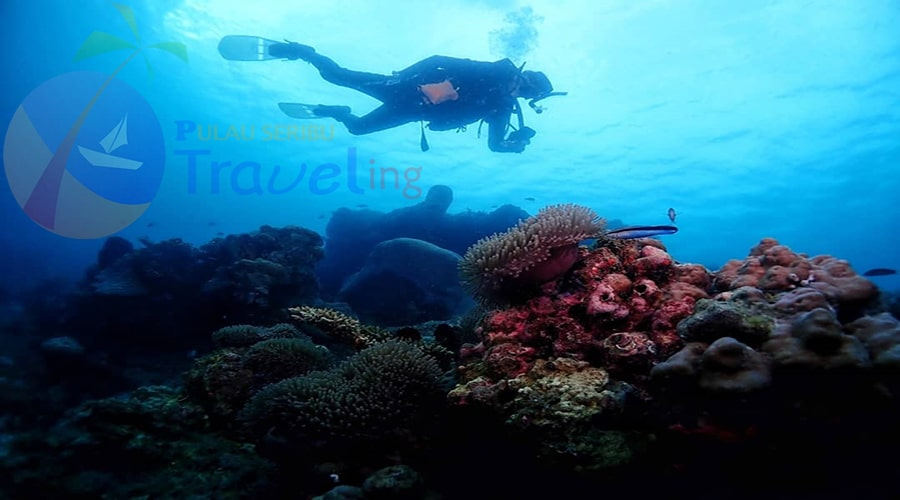 spot diving pulau seribu