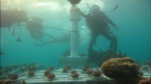diving pulau seribu