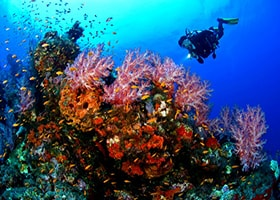 diving di pulau pari