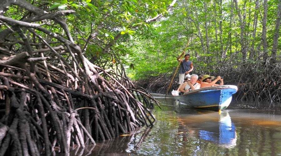 phon mangrove pulau pari