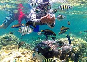 snorkling di pulau pari