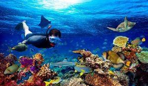snorkling pulau seribu