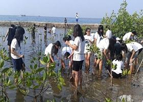 taman mangrof pulau tidung jakarta