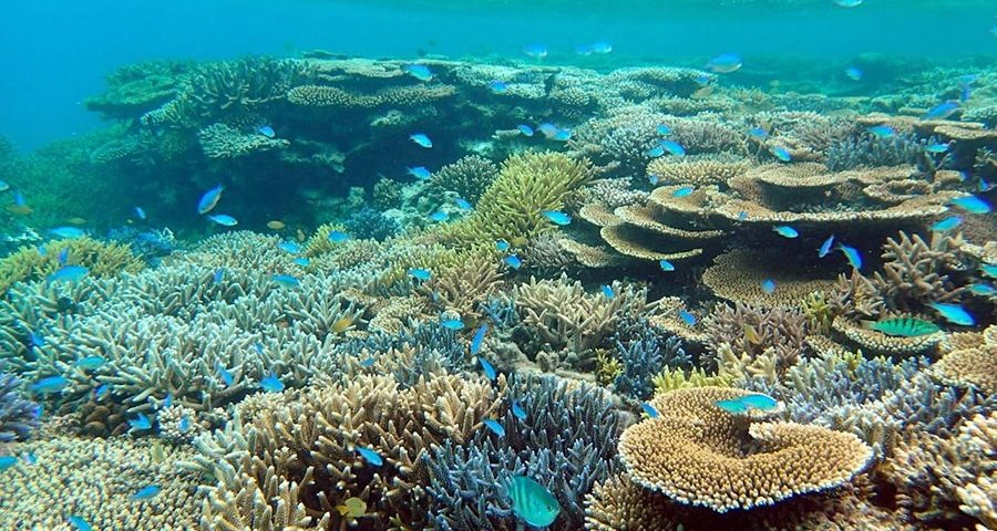 spot snorkeling Kepulauan Seribu